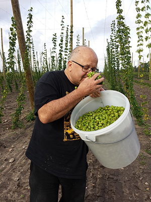 Accroissement de la production de houblon en France grace aux brasseries artisanales